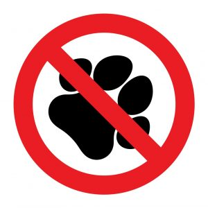 No pets allowed at the Pitchfork Music Festival
