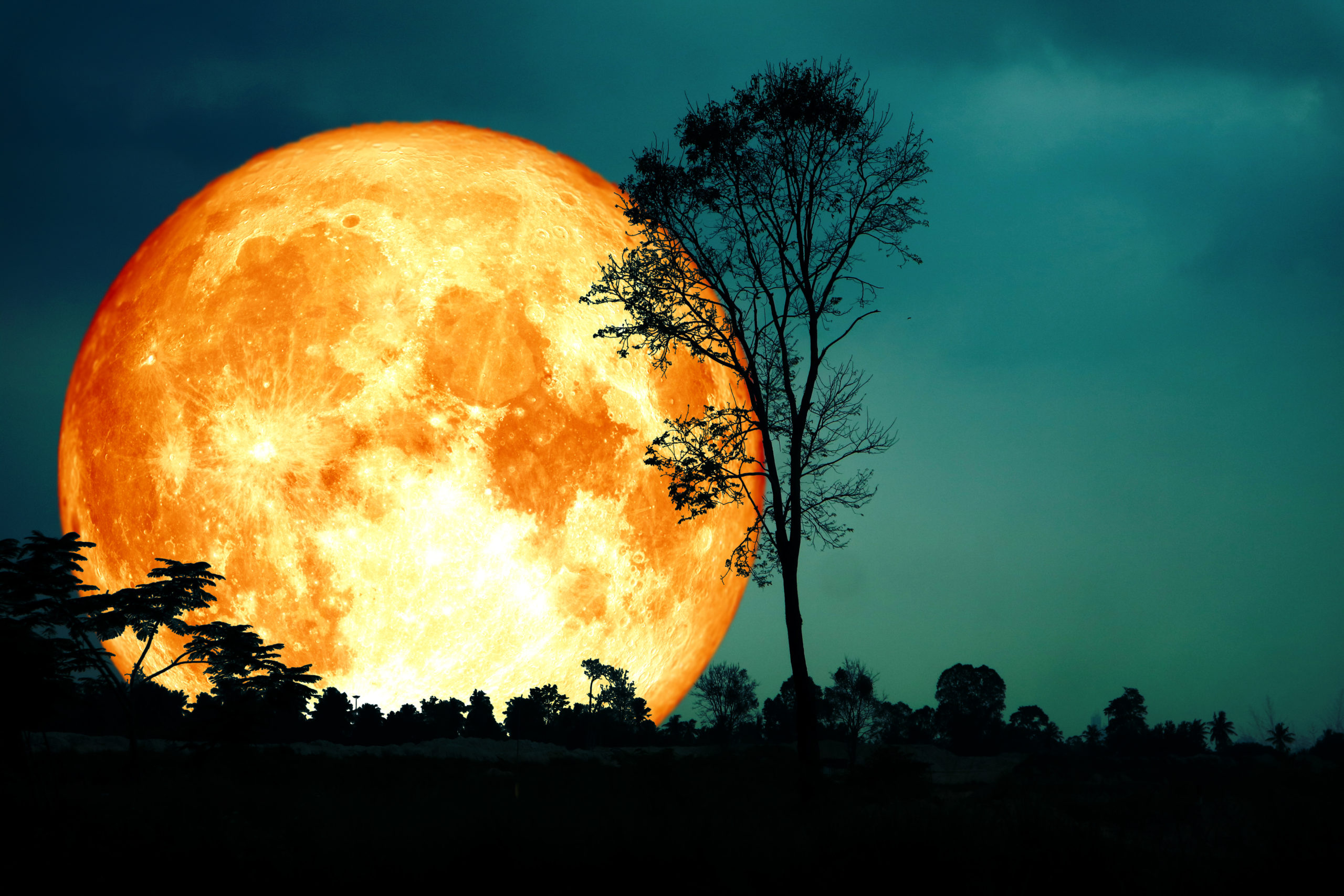 The Harvest Moon And Harvest Moon Celebration