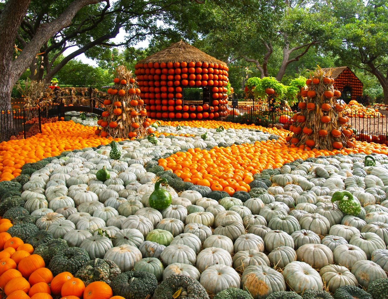 Things To Do And To View At The Autumn At The Arboretum