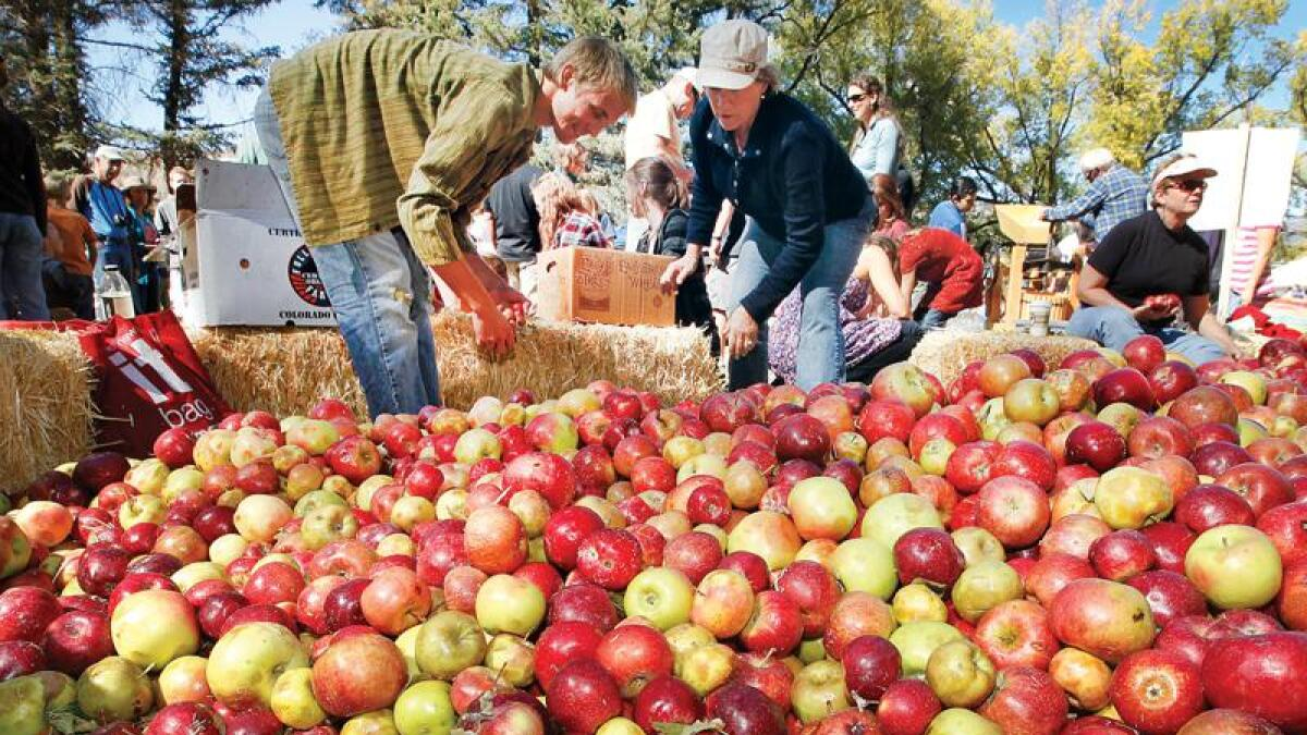 Where Is The Bayfield Apple Festival Located?