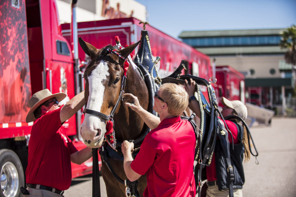the Budweiser Clydesdales will exclusively show up this year