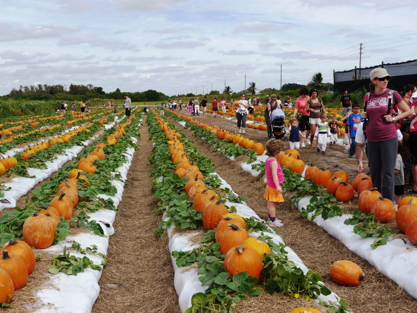 enjoy the delightful atmosphere of the Pumpkin Patch Festival