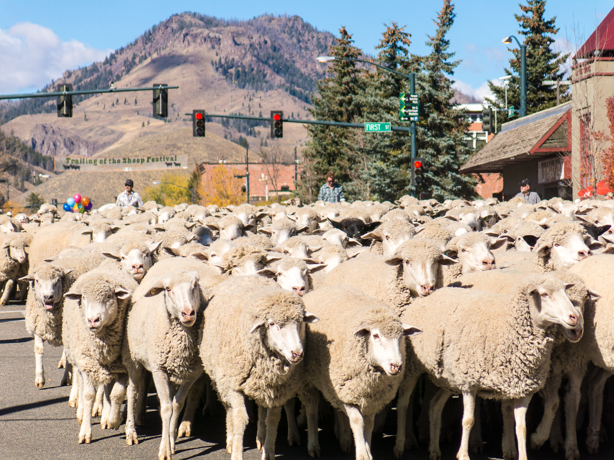 History Of Trailing Of The Sheep Festival